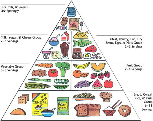fonte immagine: https://www.dealwithautism.com/forum/media/a-balanced-food-pyramid-for-autism.209/